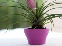 nano_centro_pink_01-mini-flower-pots-marbella-aaa122